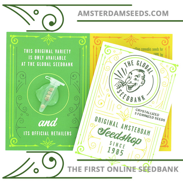 Crystallized female cannabis seeds by the amsterdam seedshop