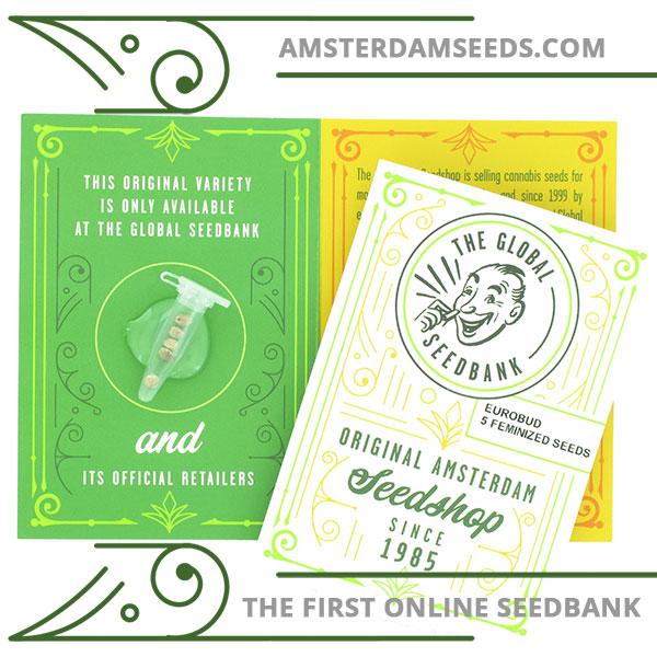 Euro Bud feminized cannabis seeds amsterdam seedshop