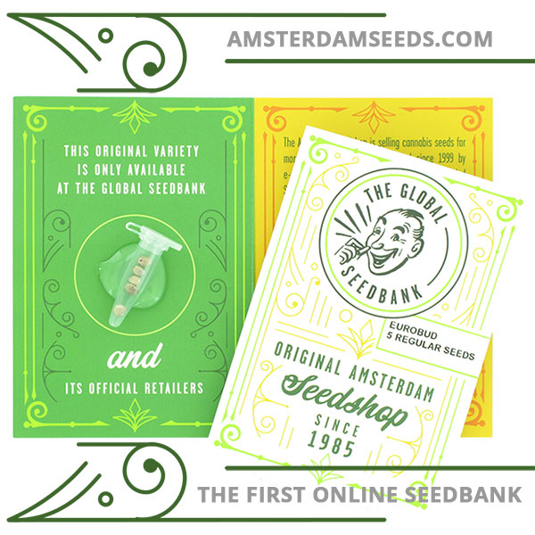5 euro bus regular cannabis seeds amsterdam seedshop