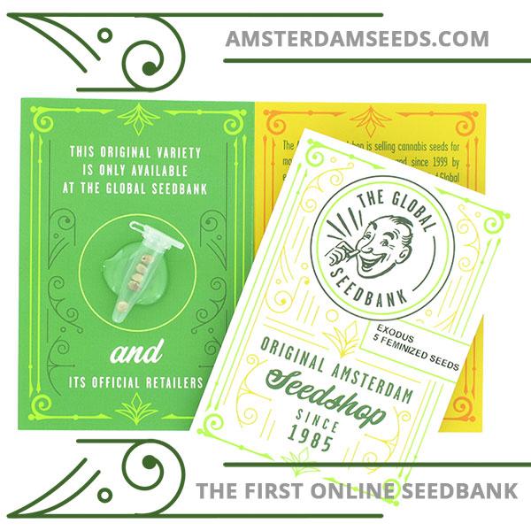 Exodus feminized cannabis seeds amsterdam seedshop