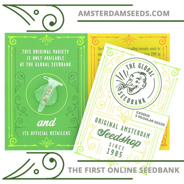 exodus regular cannabis seeds amsterdam seedshop