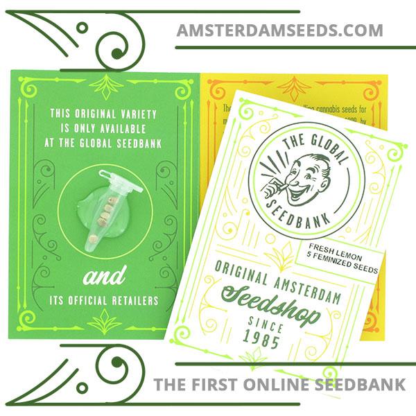 Fresh Lemon feminized cannabis seeds amsterdam seedshop
