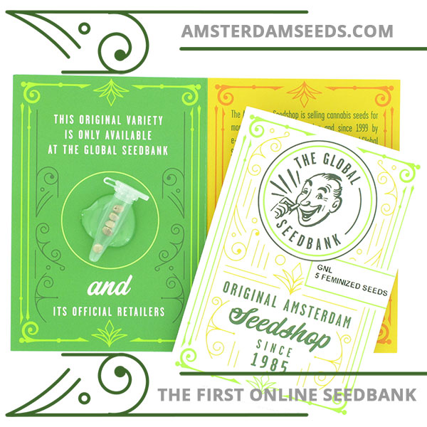 GNL feminized cannabis seeds amsterdam seedshop