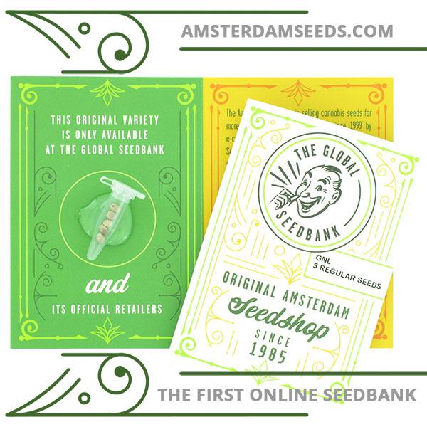 GNL Special regular cannabis seeds amsterdam seedshop