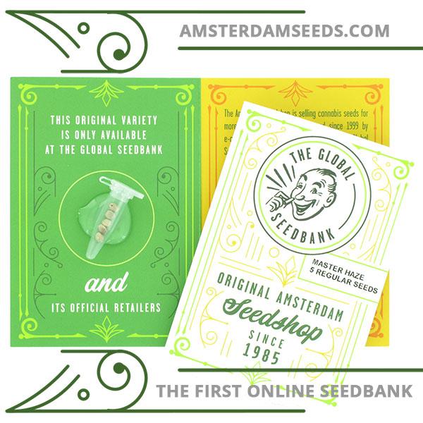 master haze regular cannabis seeds amsterdam seedshop