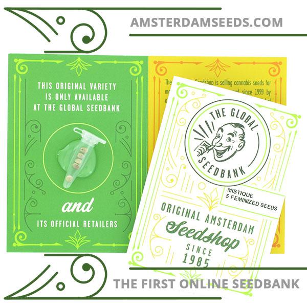 Mistique feminized cannabis seeds amsterdam seedshop