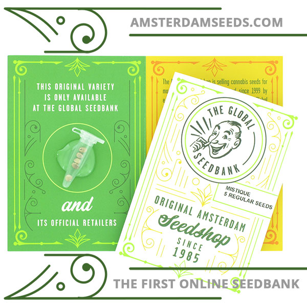 mistique regular cannabis seeds amsterdam seedshop