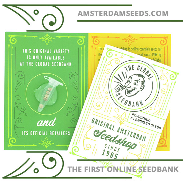 Power Bud feminized cannabis seeds amsterdam seedshop