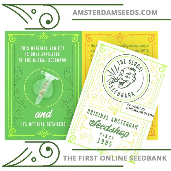 Power Bud regular cannabis seeds amsterdam seedshop