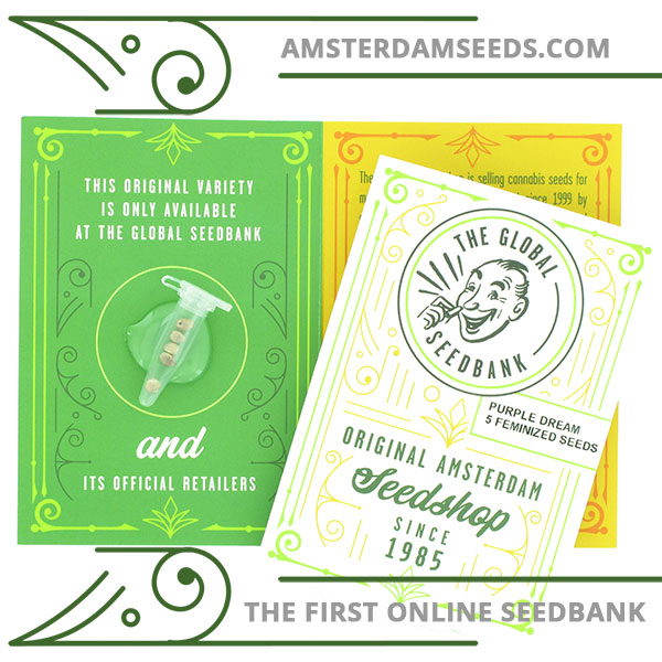 Purple Dream feminized cannabis seeds amsterdam seedshop