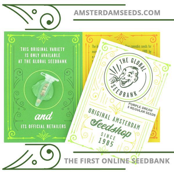 Purple Dream regular cannabis seeds amsterdam seedshop