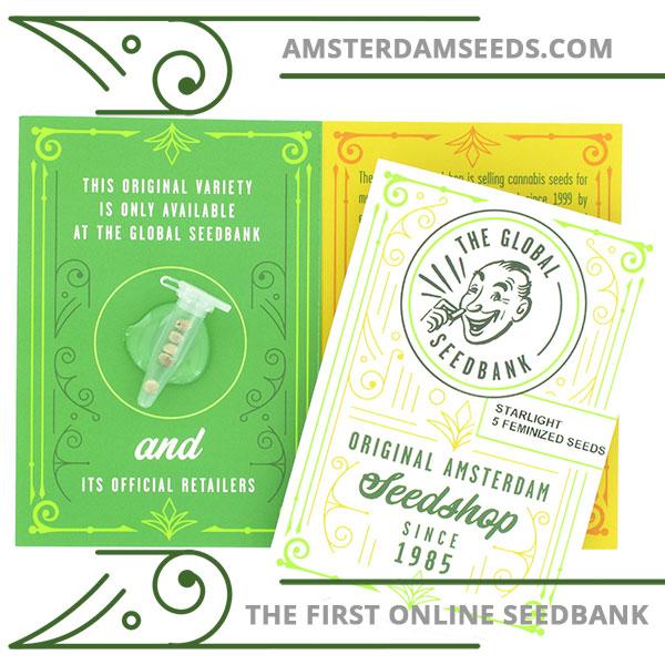 Starlight feminized cannabis seeds amsterdam seedshop