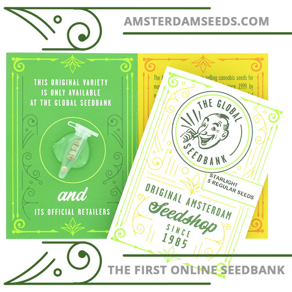 Starlight regular cannabis seeds amsterdam seedshop