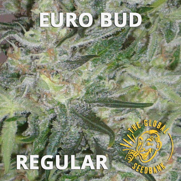 Euro Bud regular cannabis seeds by the amsterdam seedshop & global seedbank