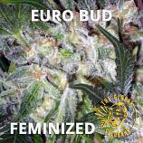 Euro Bud Feminized