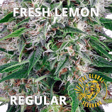 Fresh Lemon Regular