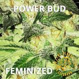 Power Bud Feminized