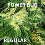 Power Bud Regular