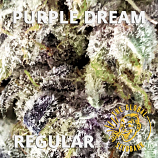 Purple Dream Regular